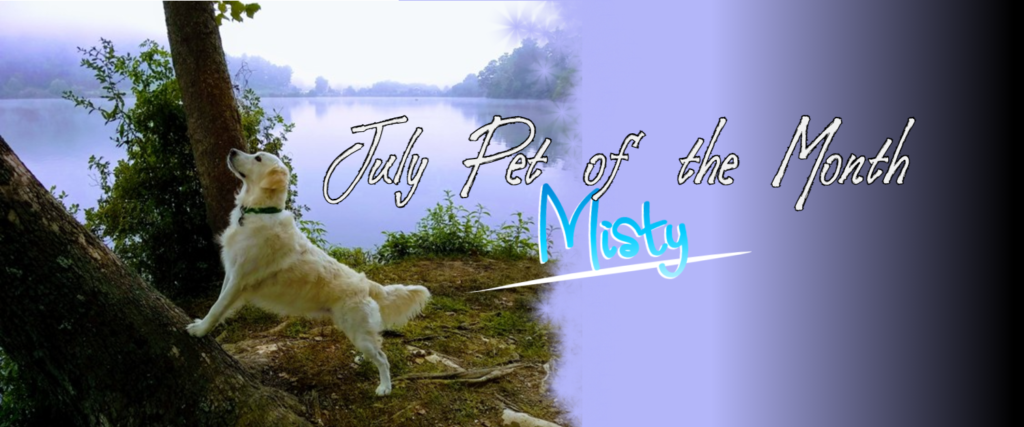 july-pet-of-the-month-misty