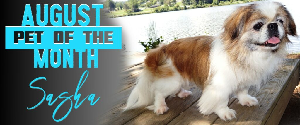 august-pet-of-the-month-sasha (1)
